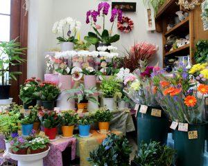 切り花だけでなく、鉢植えも アトリエ チェリ-ブラッサム